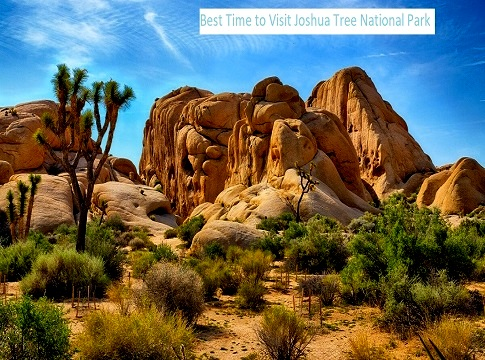 Best Time to Visit Joshua Tree National Park