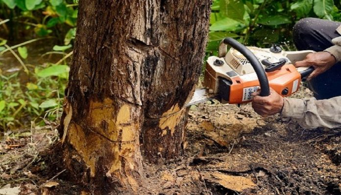 Why Should Hire Best Tree Service Company